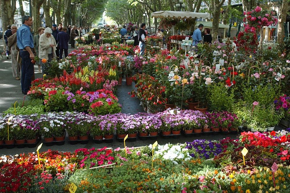 Marché aux fleurs de Béziers ©Femenias